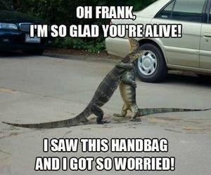 funny, handbag, and animal image