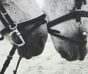 horse, equestrian, and friends image