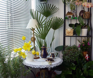 home interior decoration, indoor hanging plants, and plant decoration ideas image