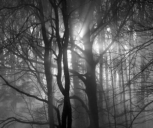 b&w, branches, and Darkness image
