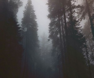 forest, nature, and dark image