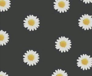 background, flowers, and black image