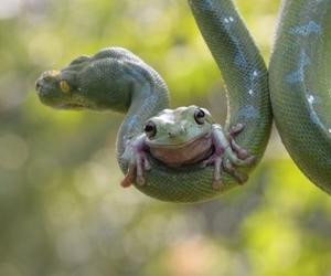 animals, snake, and frog image