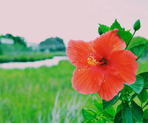bay, flower, and red image