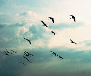 birds, Dream, and freedom image