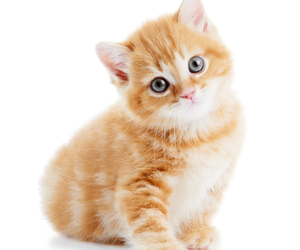 kitten, cat, and cute animals image