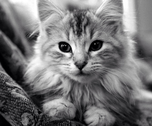 cat, cute, and fluffy image
