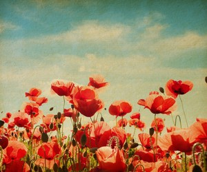 flowers, red, and vintage image