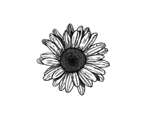 flowers, black and white, and drawing image
