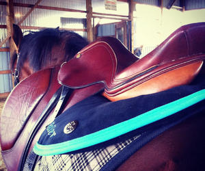custom, equestrian, and horse image