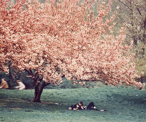 tree, love, and spring image