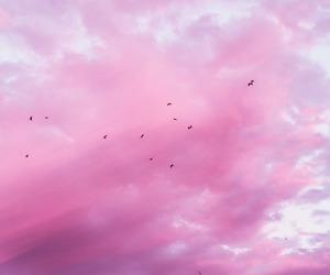 pink, sky, and bird image