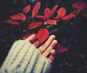 red, autumn, and leaves image