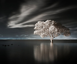 tree and landscape image