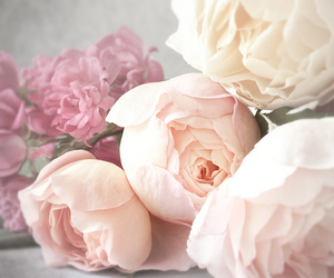 peonies, still life, and pink image
