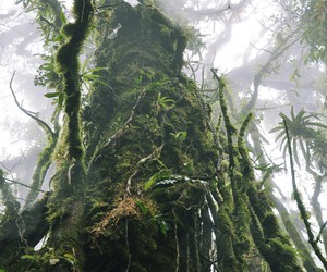 guatemala, trip, and cloud forest image