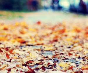 autumn, wallpaper hd, and orange things image