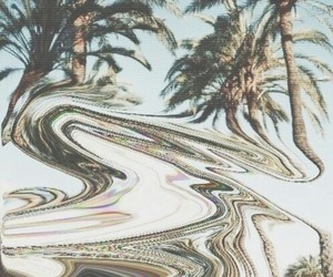 palms, palm trees, and grunge image