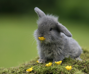 animal, bunny, and small image