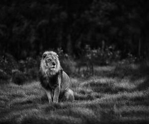 animal, black and white, and forest image