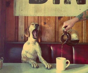 dog, coffee, and morning image