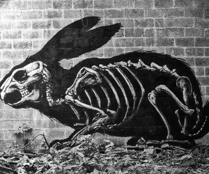 rabbit, art, and skeleton image