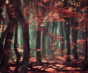 dark, forest, and Dream image