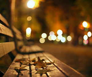 autumn, light, and leaves image