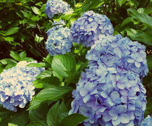 flowers, holidays, and japan image