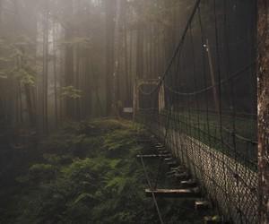 beautiful, bridge, and green image