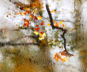 autumn, change, and fall image
