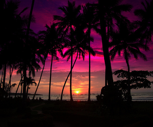 +, sun, and palm trees image