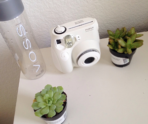 voss, pale, and plants image