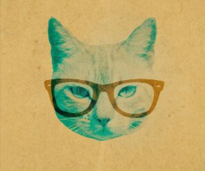 cat, wallpaper, and hipster image