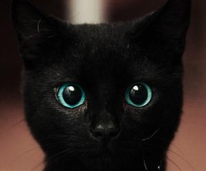 black, black cat, and blue eyes image