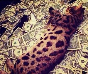 cat, money, and luxury image
