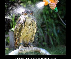 owl, funny, and self control image