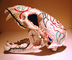 animal, badger, and day of the dead image