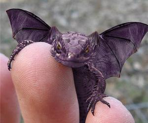 book, dragon, and purple image