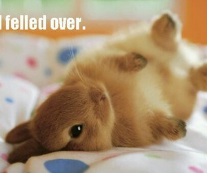 adorable, bunny, and funny image