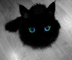 black cat, cat, and lovely image