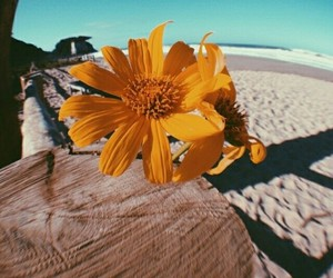 beach, flor, and vibe image