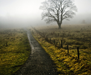 fog, nature, and photography image