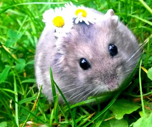 animals, hamster, and cuteanimal image