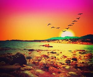 beach, beautiful, and birds image