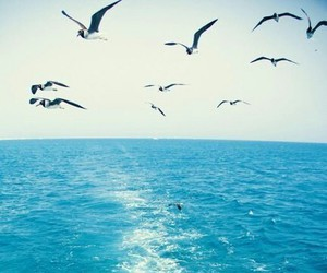 sea, bird, and blue image