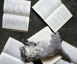 book, cat, and animal image