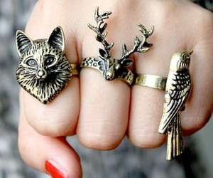 rings, animal, and bird image