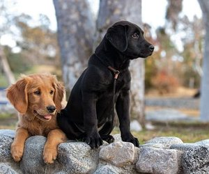 dog, cute, and friends image