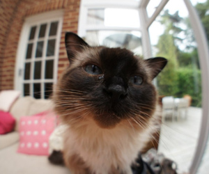 cat, cute, and amazing image
